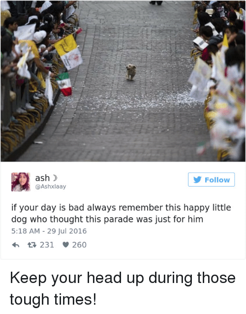 keep your head up: ash  Follow  @Ashxlaay  if your day is bad always remember this happy little  dog who thought this parade was just for him  5:18 AM 29 Jul 2016  231 260 Keep your head up during those tough times!