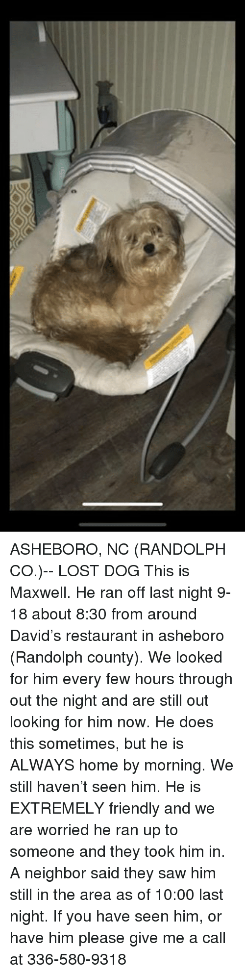 Memes, Saw, and Lost: ASHEBORO, NC (RANDOLPH CO.)-- LOST DOG  This is Maxwell. He ran off last night 9-18 about 8:30 from around David's restaurant in asheboro (Randolph county). We looked for him every few hours through out the night and are still out looking for him now. He does this sometimes, but he is ALWAYS home by morning. We still haven't seen him. He is EXTREMELY friendly and we are worried he ran up to someone and they took him in. A neighbor said they saw him still in the area as of 10:00 last night. If you have seen him, or have him please give me a call at 336-580-9318