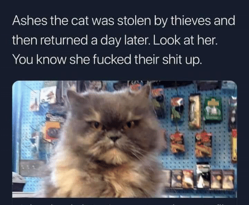 ashes: Ashes the cat was stolen by thieves and  then returned a day later. Look at her  You know she fucked their shit up.