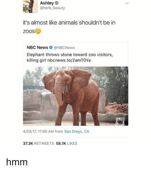 Animals, News, and Elephant: Ashley  @herb beauty  it's almost like animals shouldn't be in  Zoos  NBC News NBCNews  Elephant throws stone toward zoo visitors,  killing girl nbcnews.to/2amTOYa  4/29/17 11:00 AM from San Diego, CA  37.3K  RETWEETS  58.1K  LIKES hmm
