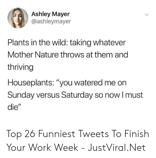 "versus: Ashley Mayer  @ashleymayer  Plants in the wild: taking whatever  Mother Nature throws at them and  thriving  Houseplants: ""you watered me on  Sunday versus Saturday so nowI must  die"" Top 26 Funniest Tweets To Finish Your Work Week - JustViral.Net"