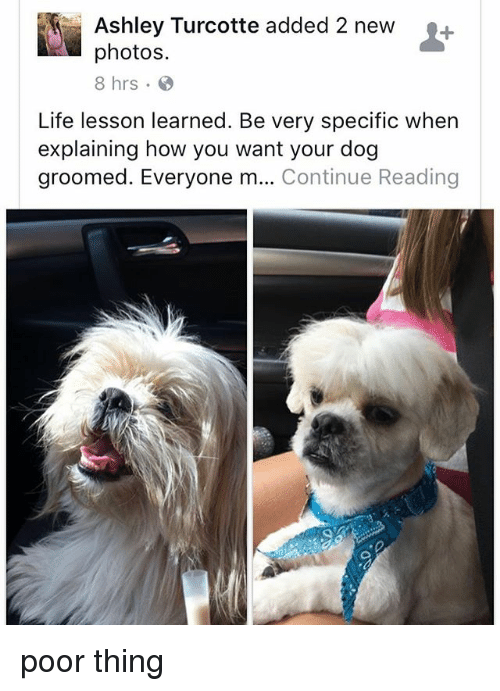 Life, Memes, and 🤖: Ashley Turcotte added 2 new+  photos.  8 hrs.  Life lesson learned. Be very specific when  explaining how you want your dog  groomed. Everyone m... Continue Reading poor thing