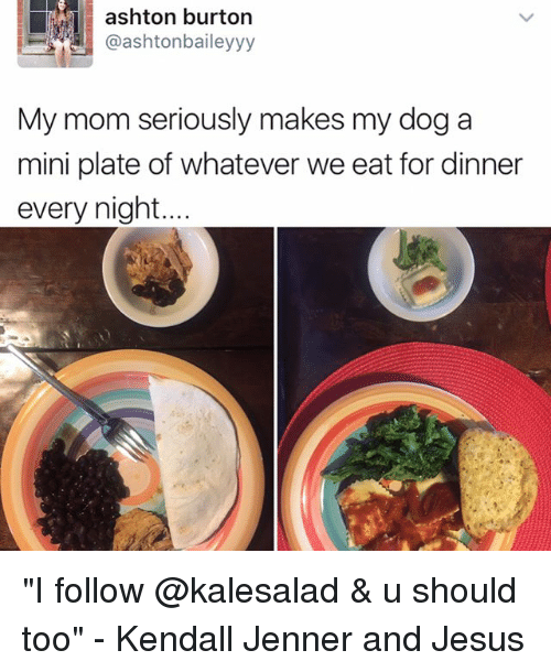 """plated: ashton burton  @ashtonbaileyyy  My mom seriously makes my dog a  mini plate of whatever we eat for dinner  every night """"I follow @kalesalad & u should too"""" - Kendall Jenner and Jesus"""