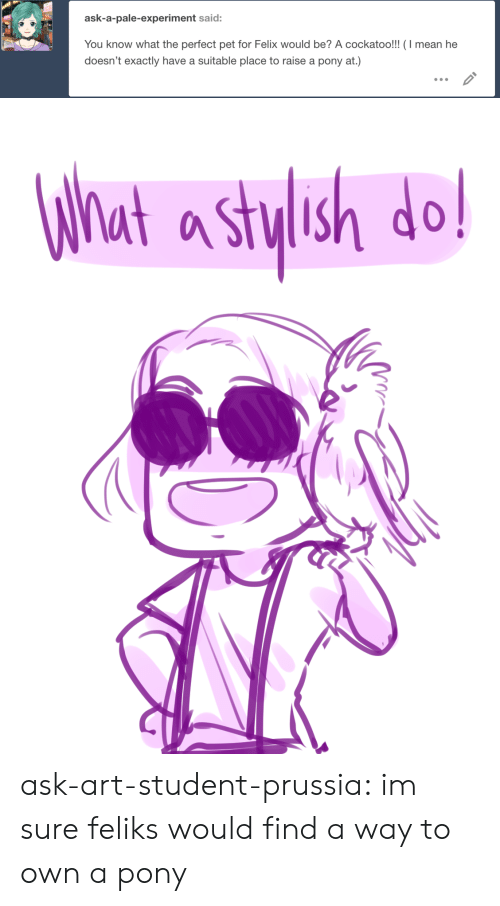 felix: ask-a-pale-experiment said:  You know what the perfect pet for Felix would be? A cockatoo!!! (I mean he  doesn't exactly have a suitable place to raise a pony at.)   What a stylsh do! ask-art-student-prussia:  im sure feliks would find a way to own a pony