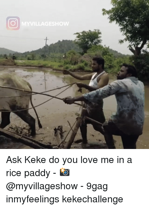 9gag, Love, and Memes: Ask Keke do you love me in a rice paddy - 📸 @myvillageshow - 9gag inmyfeelings kekechallenge