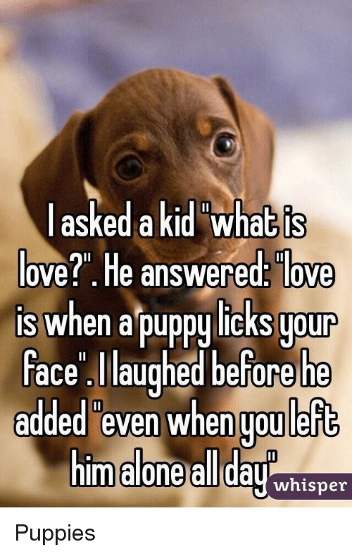 """licks: askedakid what is  ove?"""". He answered: love  is when a puppy licks uour  ace laughed before he  added even when uou left  m alone all dayhisner Puppies"""