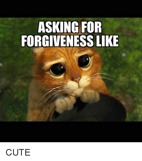 asking for forgiveness like cute 832880 asking for forgiveness like cute cute meme on sizzle
