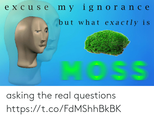 questions: asking the real questions https://t.co/FdMShhBkBK