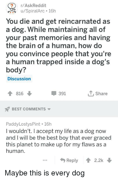 Dogs, Life, and Best: /AskReddit  u/SpiralArc 16h  You die and get reincarnated as  a dog. While maintaining all of  your past memories and having  the brain of a human, how do  you convince people that you're  a human trapped inside a dog's  body?  Discussion  816  391  Share  BEST COMMENTS ▼  PaddyLostysPint 16h  I wouldn't. I accept my life as a dog now  and I will be the best boy that ever grace  this planet to make up for my flaws as a  human.  Reply 2.2k Maybe this is every dog