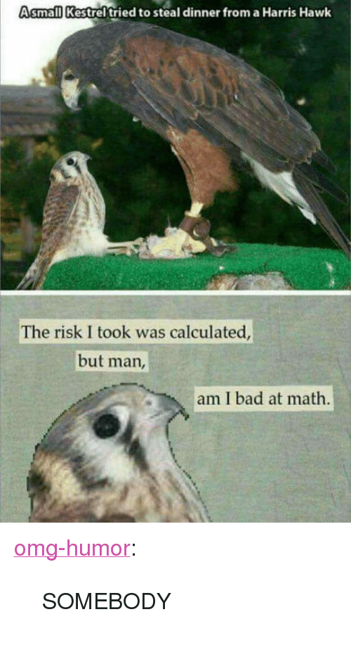 """Risk I Took Was Calculated But Man Am I Bad At Math: Asmall Kestrel tried to steal dinner from a Harris Hawk  The risk I took was calculated  but man  am I bad at math <p><a href=""""http://omg-humor.com/post/160496854497/somebody"""" class=""""tumblr_blog"""">omg-humor</a>:</p>  <blockquote><p>SOMEBODY</p></blockquote>"""