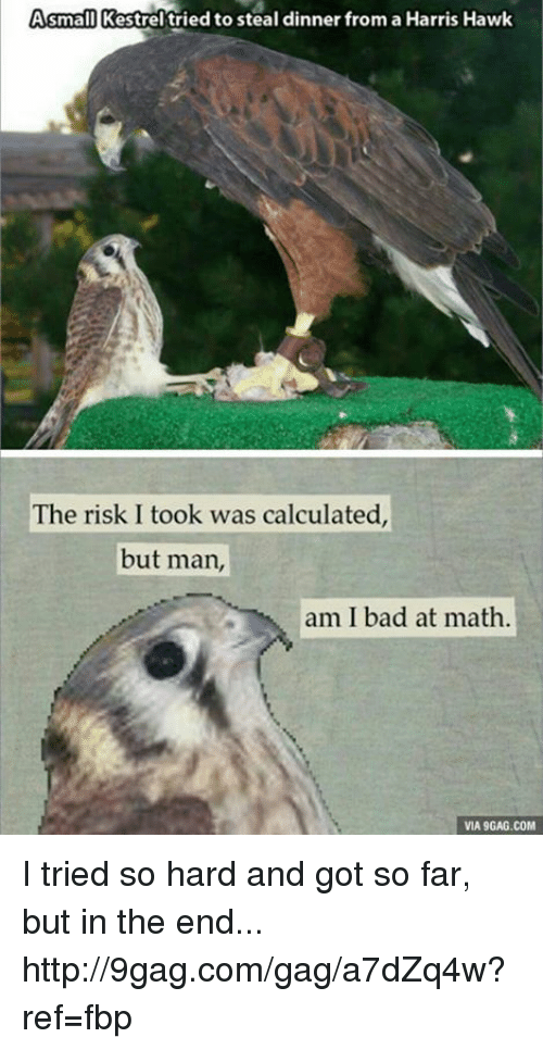 i tried so hard and got so far: Asmall Kestrel tried to steal dinner from a Harris Hawk  The risk I took was calculated,  but man,  am I bad at math.  VIA 9GAG.COM I tried so hard and got so far, but in the end... http://9gag.com/gag/a7dZq4w?ref=fbp