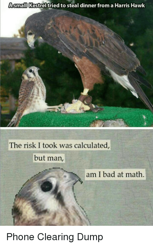Risk I Took Was Calculated But Man Am I Bad At Math: Asmall Kestrel'tried to steal dinner from a Harris Hawk  The risk I took was calculated  but man,  am I bad at math Phone Clearing Dump