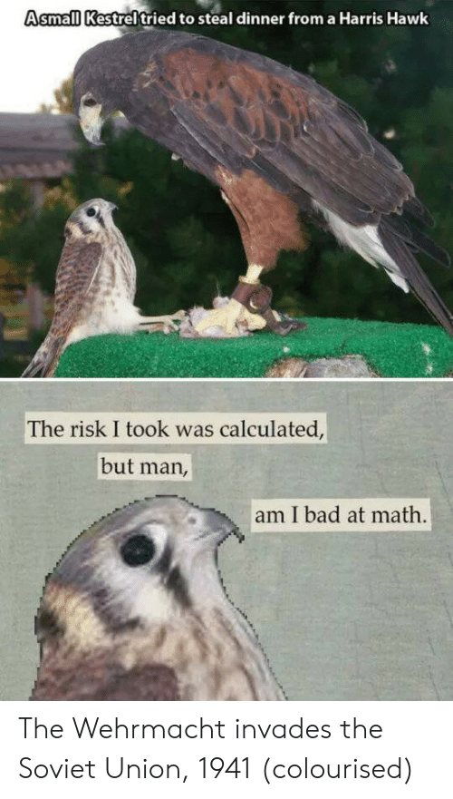 Wehrmacht: Asmall Kestreltried to steal dinner from a Harris Hawk  The risk I took was calculated,  but man,  am I bad at math. The Wehrmacht invades the Soviet Union, 1941 (colourised)