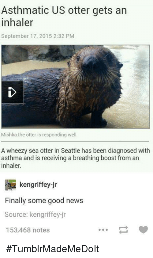 sea otter: Asthmatic US otter gets an  inhaler  September 17, 2015 2:32 PM  Mishka the otter is responding well  A wheezy sea otter in Seattle has been diagnosed with  asthma and is receiving a breathing boost from an  inhaler.  kengriffey ir  Finally some good news  Source: kengriffey-jr  153,468 notes #TumblrMadeMeDoIt