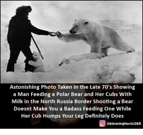 Definitely, Memes, and Taken: Astonishing Photo Taken in the Late 70's Showing  a Man Feeding a Polar Bear and Her Cubs With  Milk in the North Russia Border Shooting a Bear  Doesnt Make You a Badass Feeding One While  Her Cub Humps Your Leg Definitely Does  g @blowingfacts365