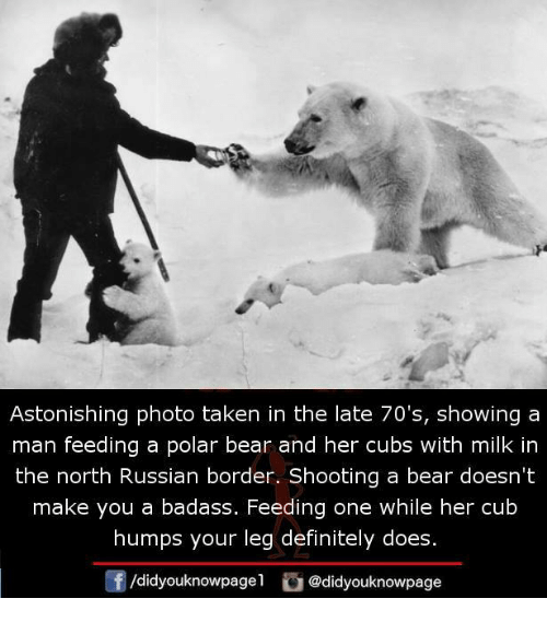 Badasses: Astonishing photo taken in the late 70's, showing a  man feeding a polar bear and her cubs with milk in  the north Russian border. Shooting a bear doesn't  make you a badass. Feeding one while her cub  humps your leg definitely does.  /didyouknowpagel@didyouknowpage