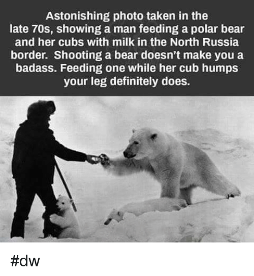 Image result for funny polar bear joke