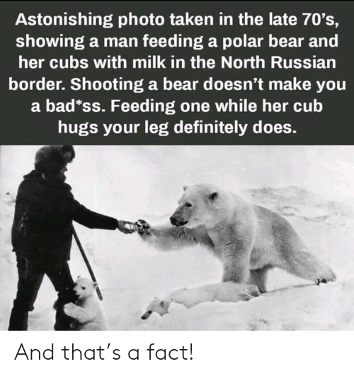 70s: Astonishing photo taken in the late 70's,  showing a man feeding a polar bear and  her cubs with milk in the North Russian  border. Shooting a bear doesn't make you  a bad*ss. Feeding one while her cub  hugs your leg definitely does. And that's a fact!