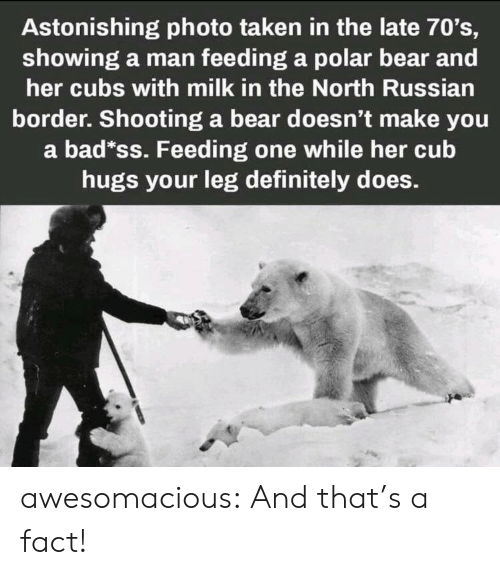 70s: Astonishing photo taken in the late 70's,  showing a man feeding a polar bear and  her cubs with milk in the North Russian  border. Shooting a bear doesn't make you  a bad*ss. Feeding one while her cub  hugs your leg definitely does. awesomacious:  And that's a fact!