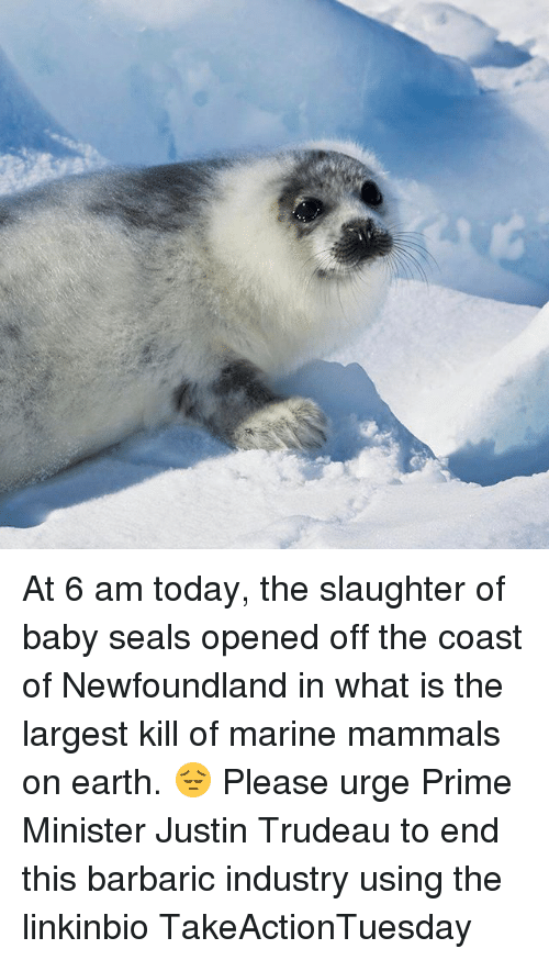 Memes, Earth, and Today: At 6 am today, the slaughter of baby seals opened off the coast of Newfoundland in what is the largest kill of marine mammals on earth. 😔 Please urge Prime Minister Justin Trudeau to end this barbaric industry using the linkinbio TakeActionTuesday