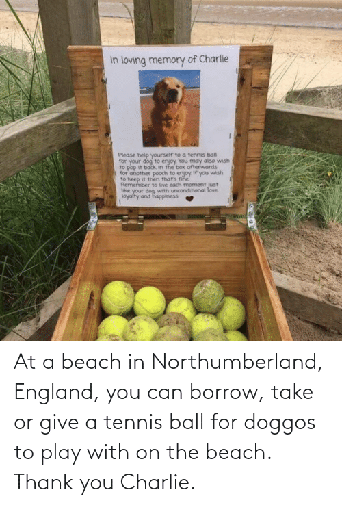 Thank You: At a beach in Northumberland, England, you can borrow, take or give a tennis ball for doggos to play with on the beach. Thank you Charlie.