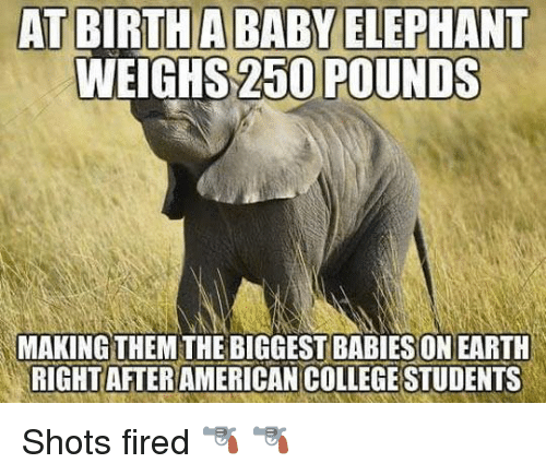Baby Elephants: AT BIRTH A BABY ELEPHANT  WEIGHS 250 POUNDS  MAKING  THEM THE BIGGESTBABIESONEARTH  RIGHT AFTER  COLLEGESTUDENTS Shots fired 🔫 🔫