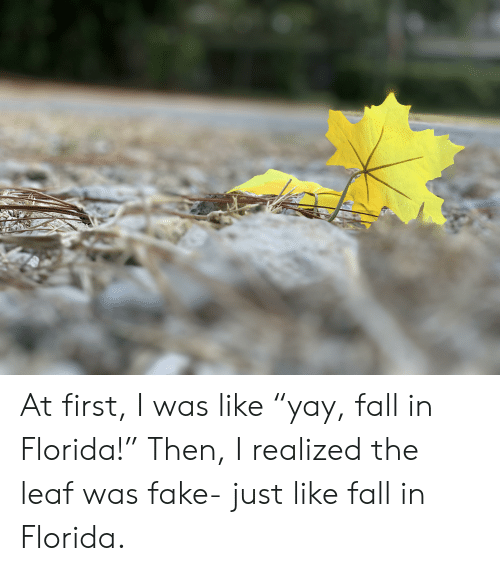 "Fall In Florida: At first, I was like ""yay, fall in Florida!"" Then, I realized the leaf was fake- just like fall in Florida."