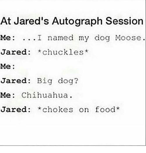 chihuahuas: At Jared's Autograph Session  Me: ...I named my dog Moose  Jared: *chuckles*  red: *chuckles  Me:  Jared: Big dog?  Me: Chihuahua.  Jared: *chokes on food