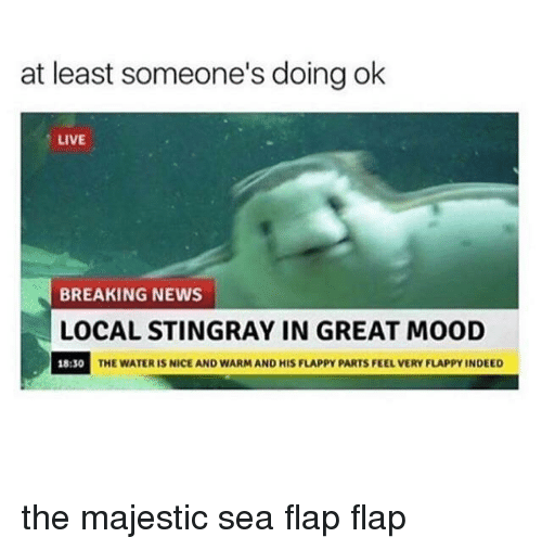 flap: at least someone's doing ok  LIVE  BREAKING NEWS  LOCAL STINGRAY IN GREAT MOOD  18:30  THE WATER IS NICE AND WARM AND HIS FLAPPY PARTS FEEL VERY FLAPPY INDEED the majestic sea flap flap