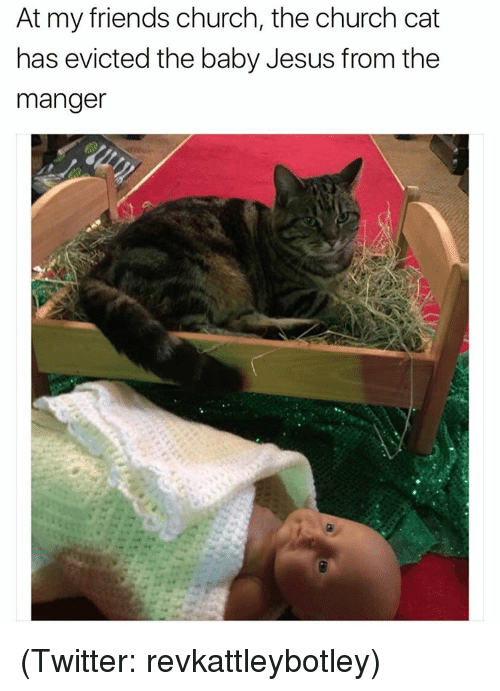Cats, Church, and Funny: At my friends church, the church cat  has evicted the baby Jesus from the  manger (Twitter: revkattleybotley)
