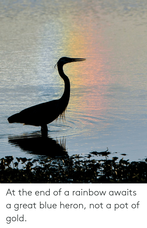 pot: At the end of a rainbow awaits a great blue heron, not a pot of gold.