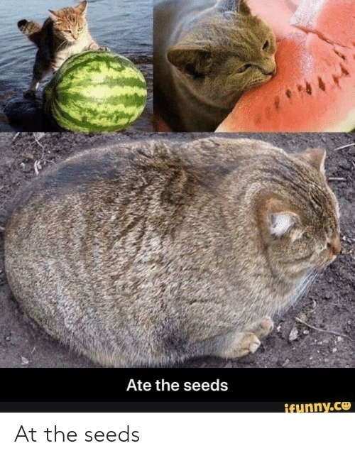 seeds: At the seeds