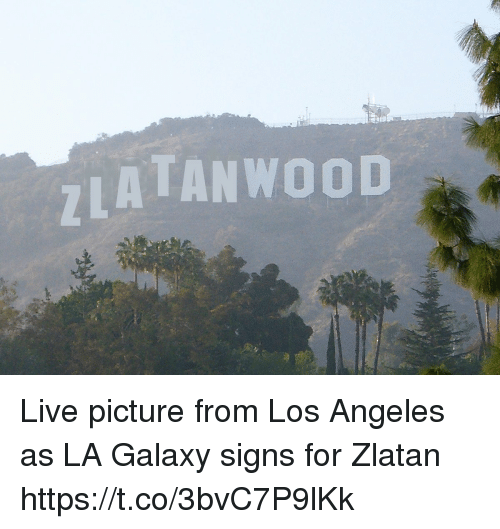 Memes, Live, and Los Angeles: ATANWOOD Live picture from Los Angeles as LA Galaxy signs for Zlatan https://t.co/3bvC7P9lKk