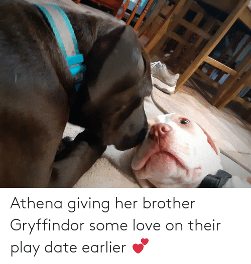 Gryffindor: Athena giving her brother Gryffindor some love on their play date earlier 💕