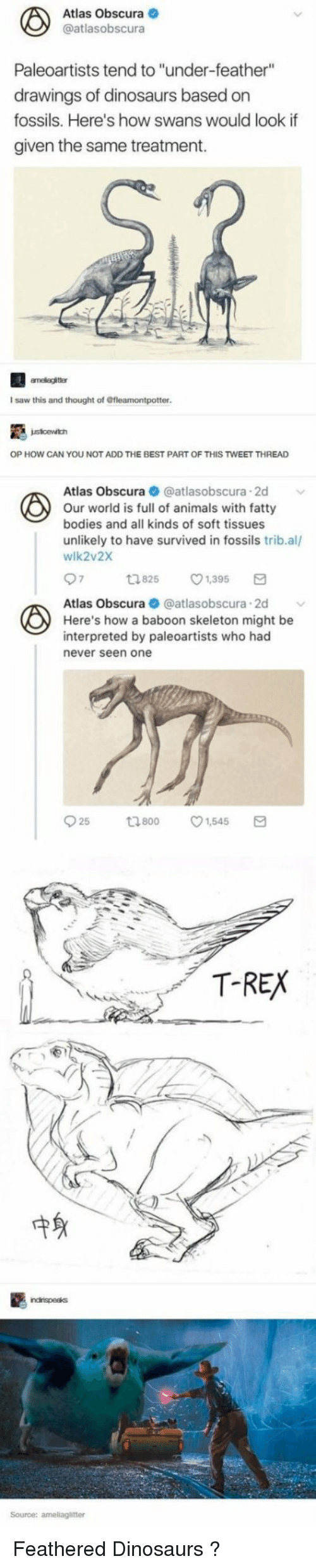 """swans: Atlas Obscura  @atlasobscura  Paleoartists tend to """"under-feather""""  drawings of dinosaurs based on  fossils. Here's how swans would look if  given the same treatment.  I saw this and thought of Gfleamontpotter  OP HOW CAN YOU NOT ADD THE BEST PART OF THIS TWEET THREAD  Atlas Obscura @atlasobscura.2d  Our world is full of animals with fatty  bodies and all kinds of soft tissues  unlikely to have survived in fossils trib.al/  wlk2v2X  1825 1,395  Atlas Obscura  atlasobscura 2d  Here's how a baboon skeleton might be  interpreted by paleoartists who had  never seen one  T-REX  中身  Source: ameliaglitter Feathered Dinosaurs ?"""