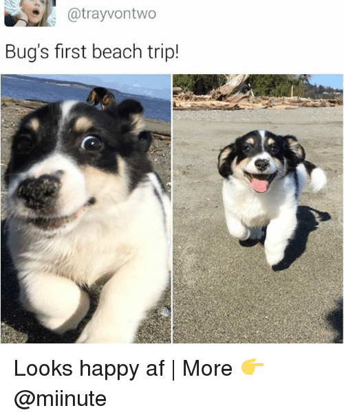 tripped: atrayvontwo  Bug's first beach trip! Looks happy af | More 👉 @miinute