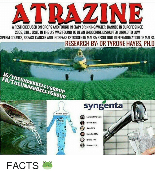 Memes, 🤖, and Sperm: ATRAZINE  A PESTICIDE USED ON CROPS AND FOUNDIN (TAP) DRINKING WATER. BANNEDINEUROPESINCE  2003, STILL USED IN THE US WAS FOUND TOBE AN ENDOCRINE DISRUPTER LINKED TOLOW  SPERM COUNTS, BREASTCANCERANDINCREASE ESTROGEN IN MALES: RESULTING IN EFFEMINIZATION OF MALES.  RESEARCH BY: DR TYRONE HAYES, PH.D  FB/THEUNDERBELLYGROUP  Syngenta  Human Body  Lungs: 90% water  Blood: 82%  Skin:80%  Muscle: 75%  Brain: 70%  Bones: 22% FACTS 🐸