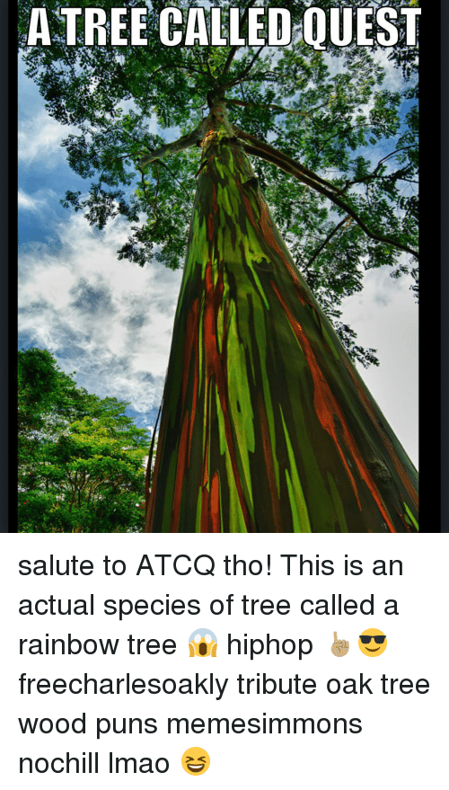 Wood Puns: ATREE CALLED:0UEST  3 salute to ATCQ tho! This is an actual species of tree called a rainbow tree 😱 hiphop ☝🏽️😎 freecharlesoakly tribute oak tree wood puns memesimmons nochill lmao 😆