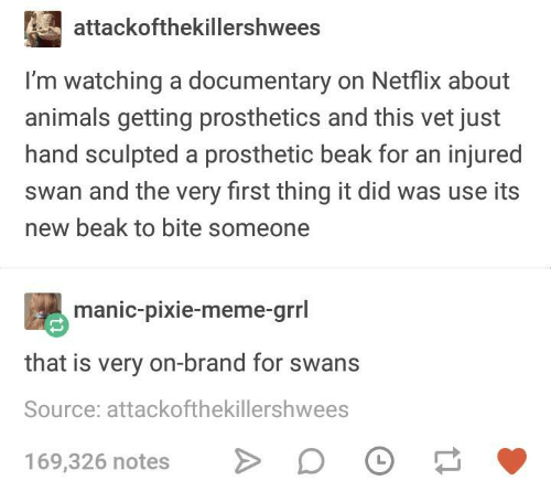swans: attackofthekillershwees  I'm watching a documentary on Netflix about  animals getting prosthetics and this vet just  hand sculpted a prosthetic beak for an injured  swan and the very first thing it did was use its  new beak to bite someone  manic-pixie-meme-grrl  that is very on-brand for swans  Source: attackofthekillershwees  169,326 notes