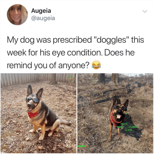"""Canc: Augeia  @augeia  My dog was prescribed """"doggles"""" this  week for his eve condition. Does he  remind you of anyone?  CANC  STAY"""