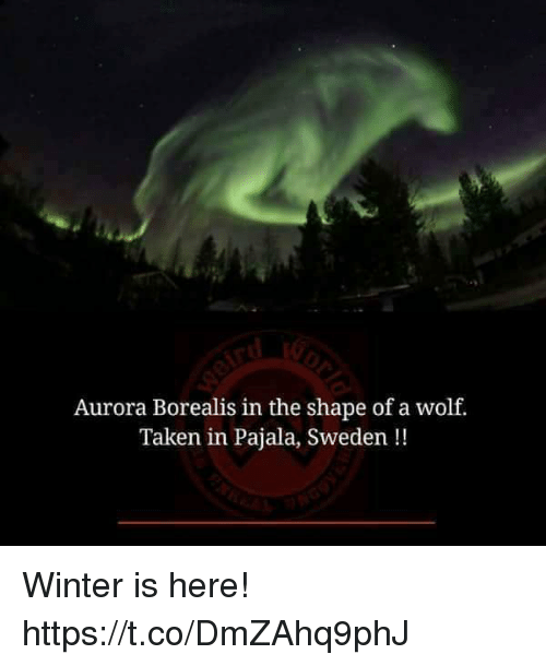 aurora borealis: Aurora Borealis in the shape of a wolf.  Taken in Pajala, Sweden!! Winter is here! https://t.co/DmZAhq9phJ