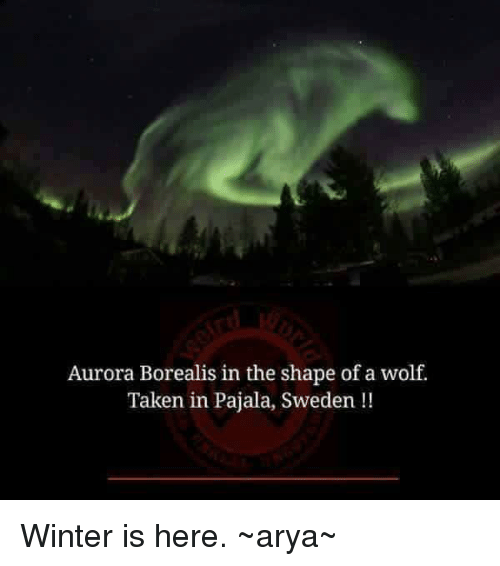 aurora borealis: Aurora Borealis in the shape of a wolf.  Taken in Pajala, Sweden Winter is here.  ~arya~