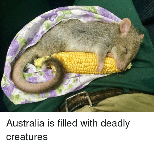 Australia, Creatures, and Deadly Creatures: Australia is filled with deadly creatures