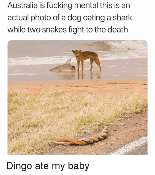 dingo: Australia is fucking mental this is an  actual photo of a dog eating a shark  while two snakes fight to the death Dingo ate my baby