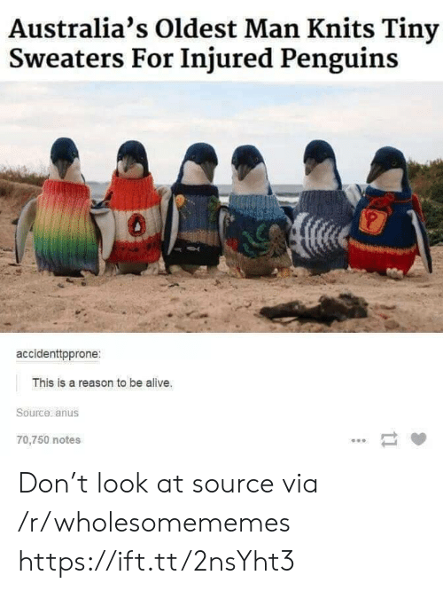 to-be-alive: Australia's Oldest Man Knits Tiny  Sweaters For Injured Penguins  accidenttpprone:  This is a reason to be alive.  Source anus  70,750 notes  ti Don't look at source via /r/wholesomememes https://ift.tt/2nsYht3
