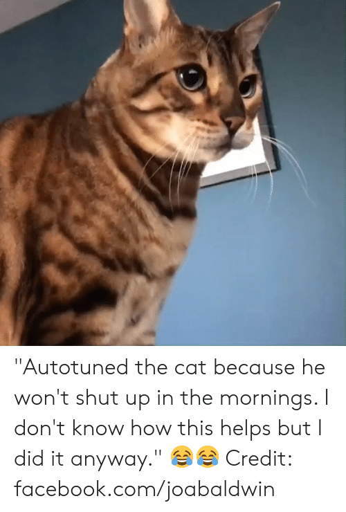 "Mornings: ""Autotuned the cat because he won't shut up in the mornings. I don't know how this helps but I did it anyway."" 😂😂  Credit: facebook.com/joabaldwin"