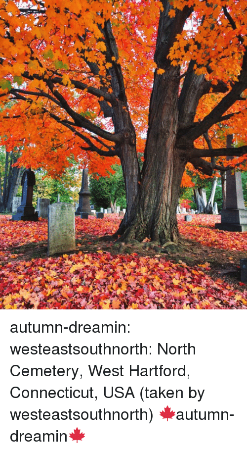 Connecticut: autumn-dreamin: westeastsouthnorth:  North Cemetery, West Hartford, Connecticut, USA (taken by westeastsouthnorth)   🍁autumn-dreamin🍁
