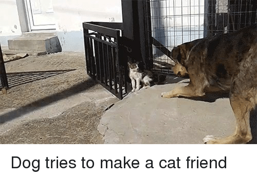 how to make a cat and dog friends