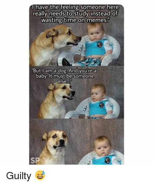 "Memes, Time, and Baby: ave the feeling someone here  really needs to study instead of  wasting time on memes.  ""But I am a dog. And you'  e a  baby. It must be someone  else.  SP Guilty 😅"