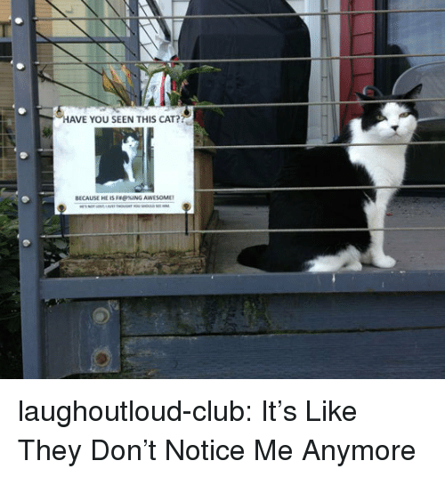 notice me: AVE YOU SEEN THIS CAT?  BECAUSE HE IS FRKING AWESOME laughoutloud-club:  It's Like They Don't Notice Me Anymore